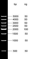 500bp DNA Marker